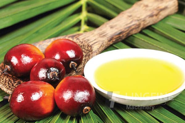 palm oil, plant oil suppliers and manufacturers - palmoilproduction - page 19